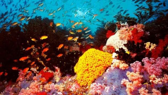 tubbataha-reef.-philippines-lucindadennis